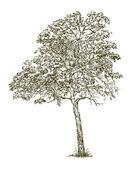 Arbre à feuilles caduques — Vecteur