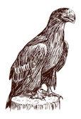 Eagle chick — Stock Vector