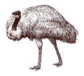 Emu sketch — Stock Vector