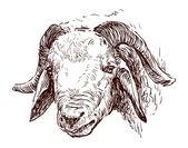 Head of goat — Stock Vector