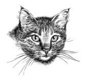 Head of cat — Stock Vector