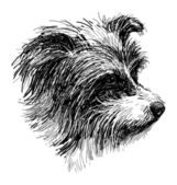 Head of shaggy dog — Stock Vector