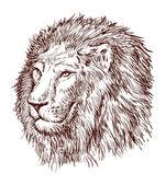 Testa di leone — Vettoriale Stock