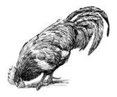 Pecking rooster — Cтоковый вектор