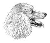 贵宾犬头 — Vetor de Stock