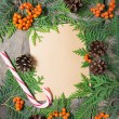Blank christmas greeting card with fir tree, pinecones and rowan — Stock Photo #51512273
