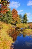 Autumn forest, Russia — Stockfoto