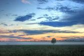 The sheaf of hay at dawn, Novgorod region ,Russia — Stock Photo