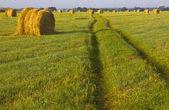 Russian field, Novgorod region ,Russia — Stock Photo