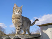 Cat Standing Against the Sky — Stock Photo