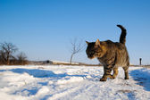 Cat on Snow — Stock Photo