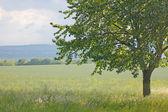 árbol verde — Foto de Stock