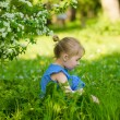 Adorable little girl sitting in the grass under blossoming apple — Stock Photo