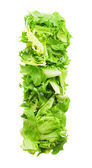 L lettuce letter — Stock Photo