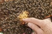 Honeycomb — ストック写真