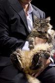 Businessman holding a cat — Stok fotoğraf