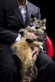 Businessman holding a cat — Stockfoto