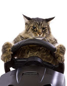 Cat driving a steering wheel — Stock Photo