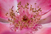 Flower's stigma or stamen — Stock Photo