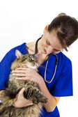 Female vet with a large cat — Stock Photo