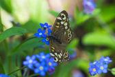 蝴蝶与鲜花 — 图库照片