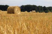 тюков сена — Стоковое фото