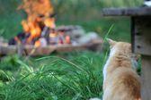 Cat by the campfire — Stock Photo