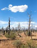 梅萨维德国家公园 — 图库照片