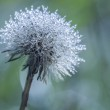 Early morning dew on dandelion — Stock Photo #48901075