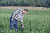 Proud farmer standing in one of his cultivated fields — Stock Photo