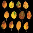 Set of autumn leaves isolated — Stock Photo #49288561
