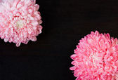 Pink red aster flowers — Stock Photo