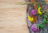 Flowers on old bark, rustic — Stock Photo