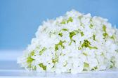 White flowers on blue, macro — Stock Photo