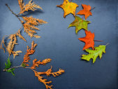 Autumn frame, cedar, maple, oak — Stock Photo