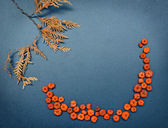 Autumn frame, pumpkins, cedar leaves — Foto Stock