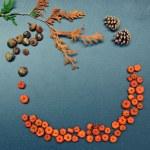 Autumn frame, pumpkins, cones, acorn — Stock Photo #51019983