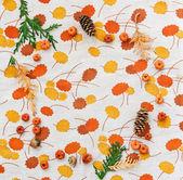Fall frame, pumpkins, cones, acorn, cedar — Photo