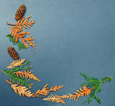 Fall frame, cones, cedar, arborvitae — Stock Photo