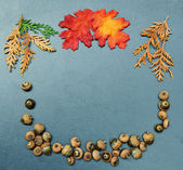 Fall Autumn frame, leaves, acorns — Stock Photo