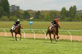Horse race — 图库照片