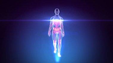 3D X-RAY Scan of Human Anatomy Walking - Animation Loop — Stock Video