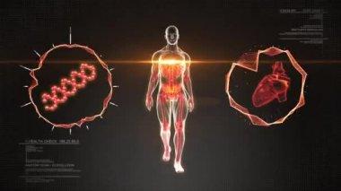 Menschlichen Körpers Spaziergänge und Skelett Scan mit Herz und Dna - Animationsschleife — Stockvideo