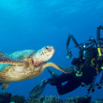Постер, плакат: Turtle and Diver