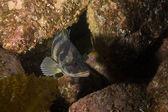 Pacific Ocean underwater fish and habitat — Zdjęcie stockowe