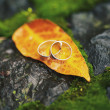 Two wedding-ring on yellow foliage — Stock Photo