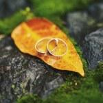 Two wedding-ring on yellow foliage — Stock Photo