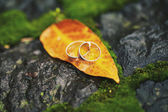 Two wedding-ring on yellow foliage — Stockfoto