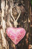 Cuore rosa bella sull'albero — Foto Stock
