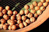 Autumn feeling walnuts — Stock Photo